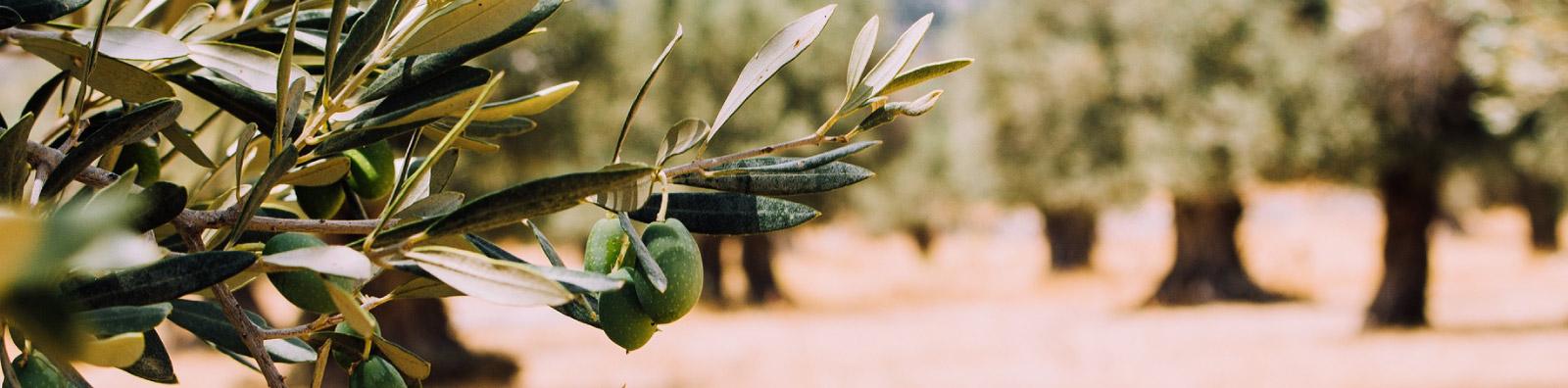 Contacta con Aceites Echinac y realiza tu pedido nacional o internacional de aceite de oliva